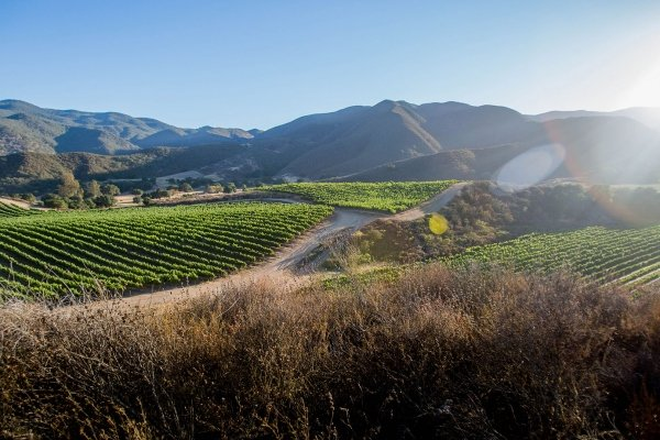Pisoni Vineyards celebrating 30 yrs of Cool Climate grapegrowing