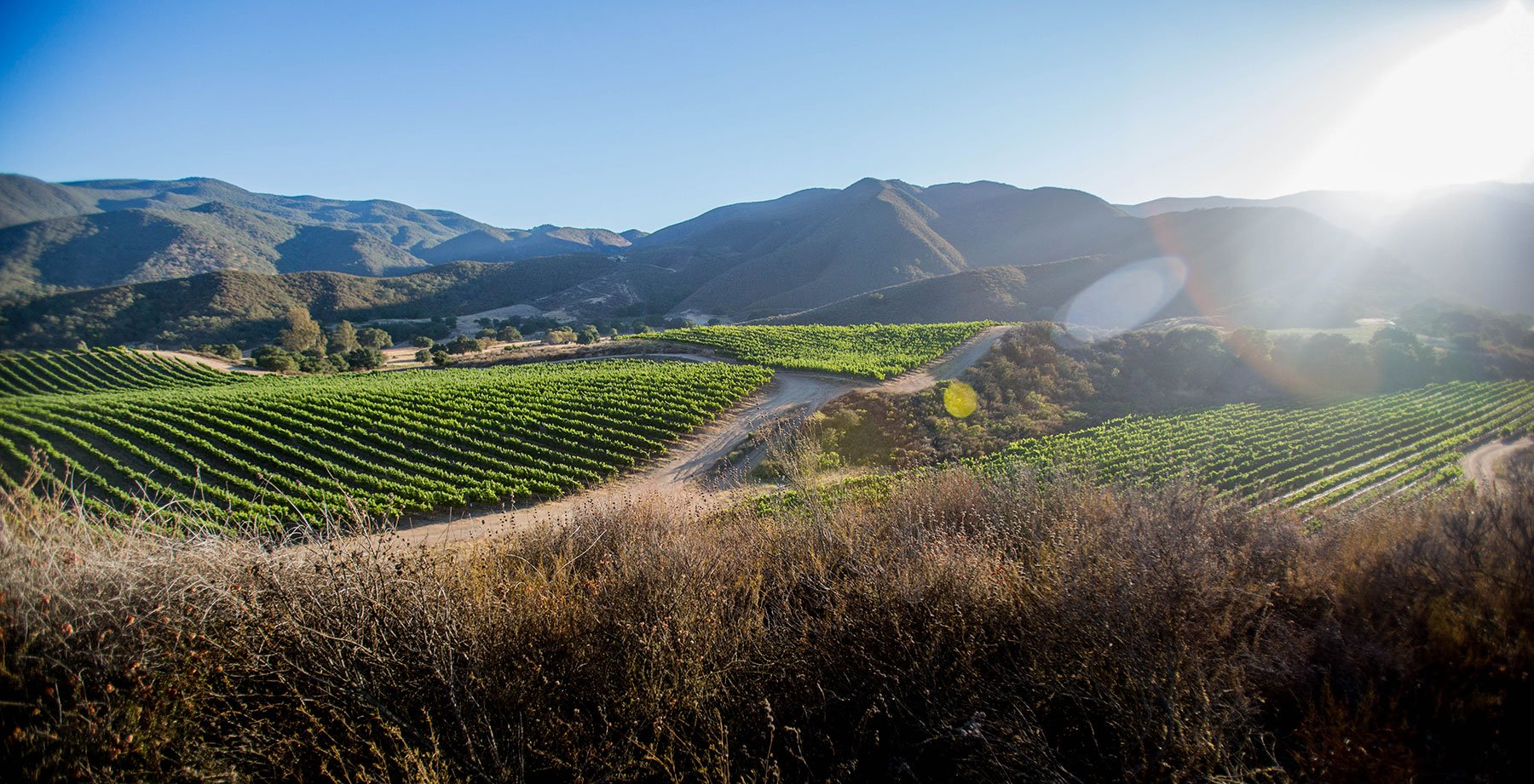Pisoni Vineyards celebrating 30 yrs of Cool Climate grapegrowing