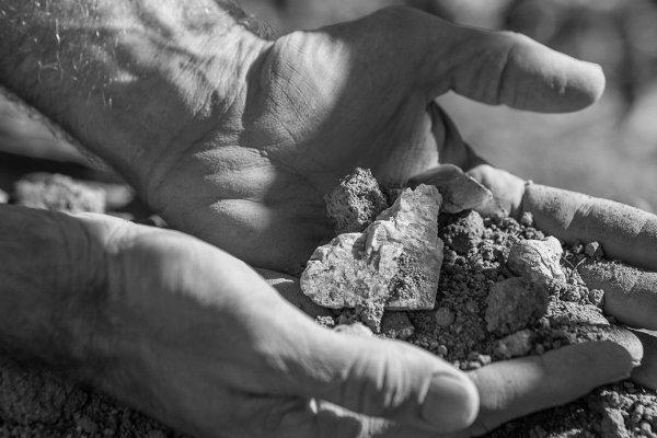 Mark Pisoni Vineyard soil Soberanes