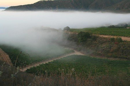 The cold fog of the Santa Lucia Highlands rolls over the vines.