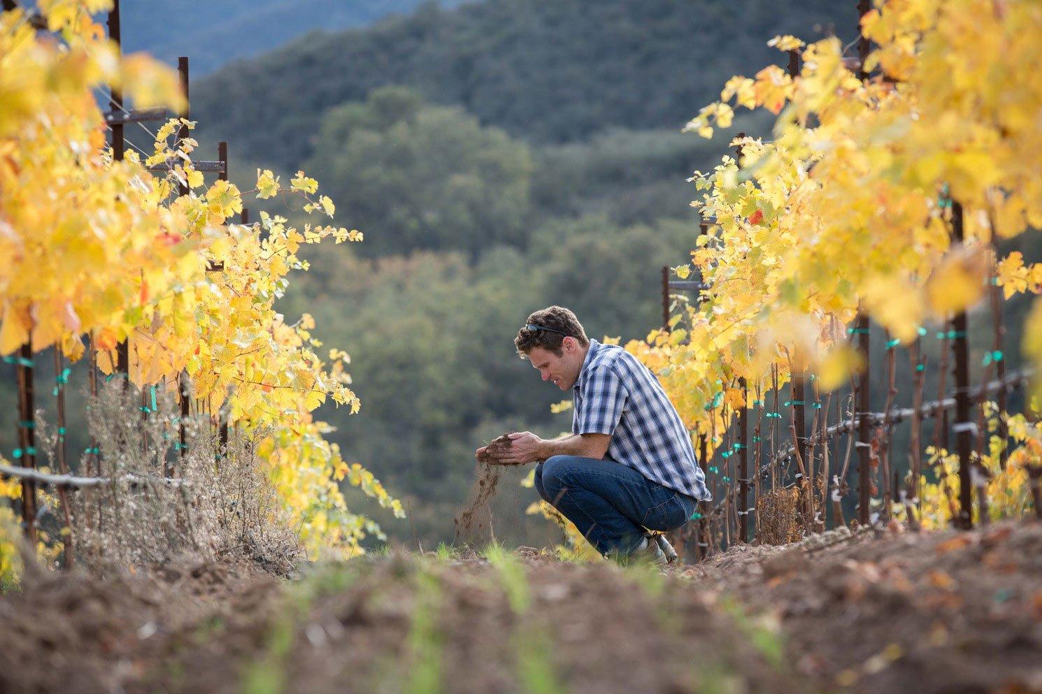 Mark Pisoni in the vineyard