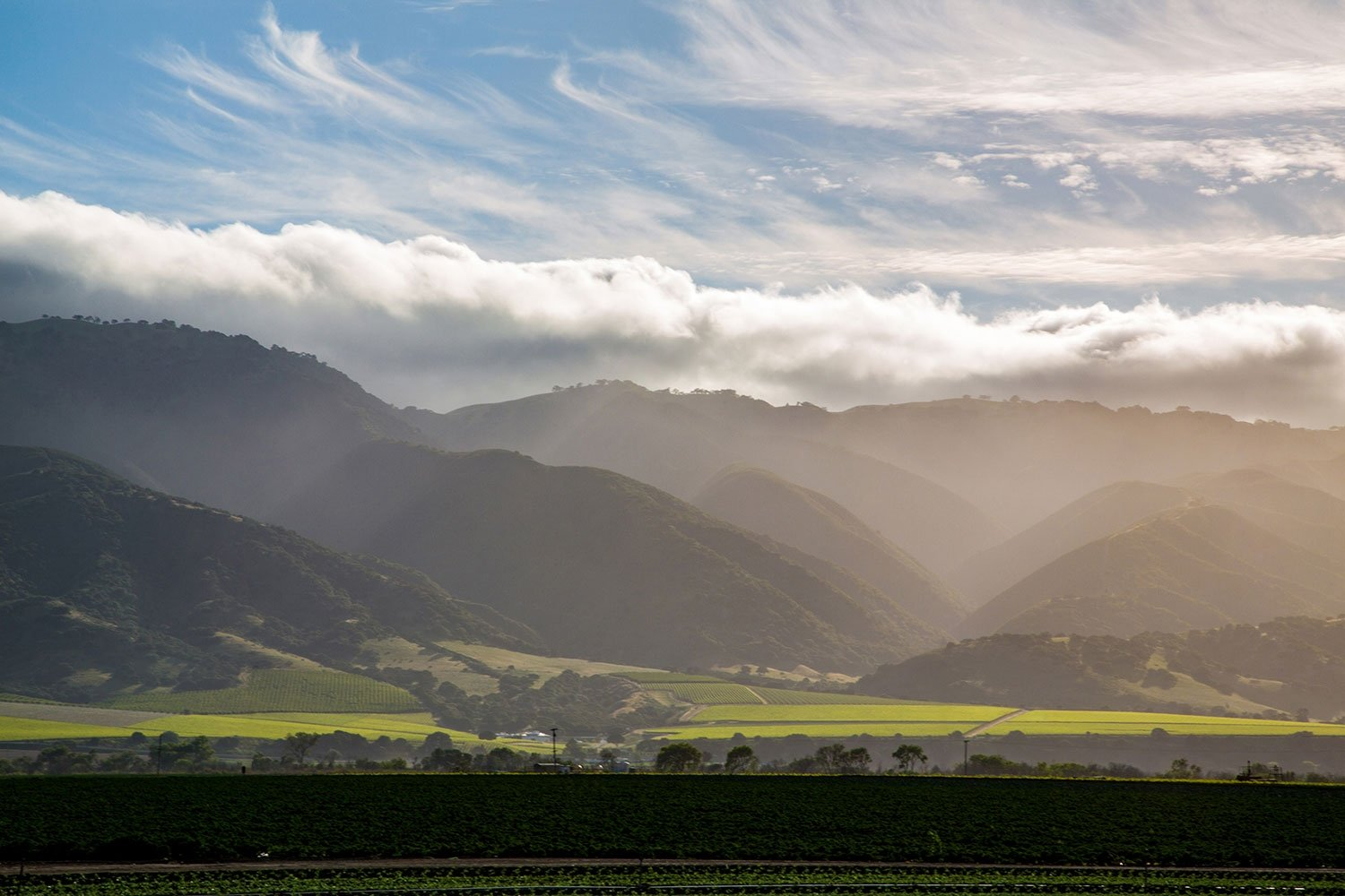 Late afternoon light over the vineyards beneath the Santa Lucia Highlands.