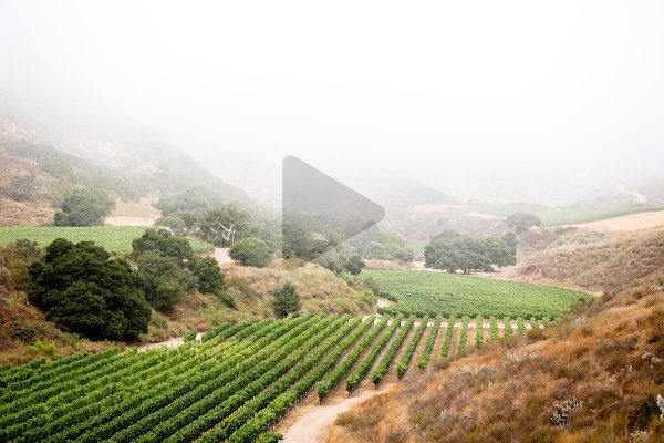 Aerial view of the fog sweeping over the Pisoni Estate vineyards
