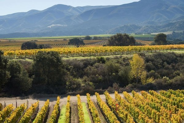 In the shadow of the Santa Lucia Mountains, the soils of Garys' Vineyard help coax intensely-concentrated flavor from the vines.