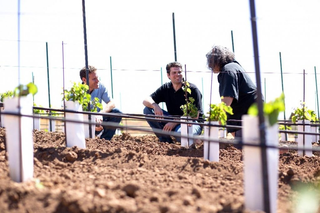 Pisoni Family Working in the Vineyards