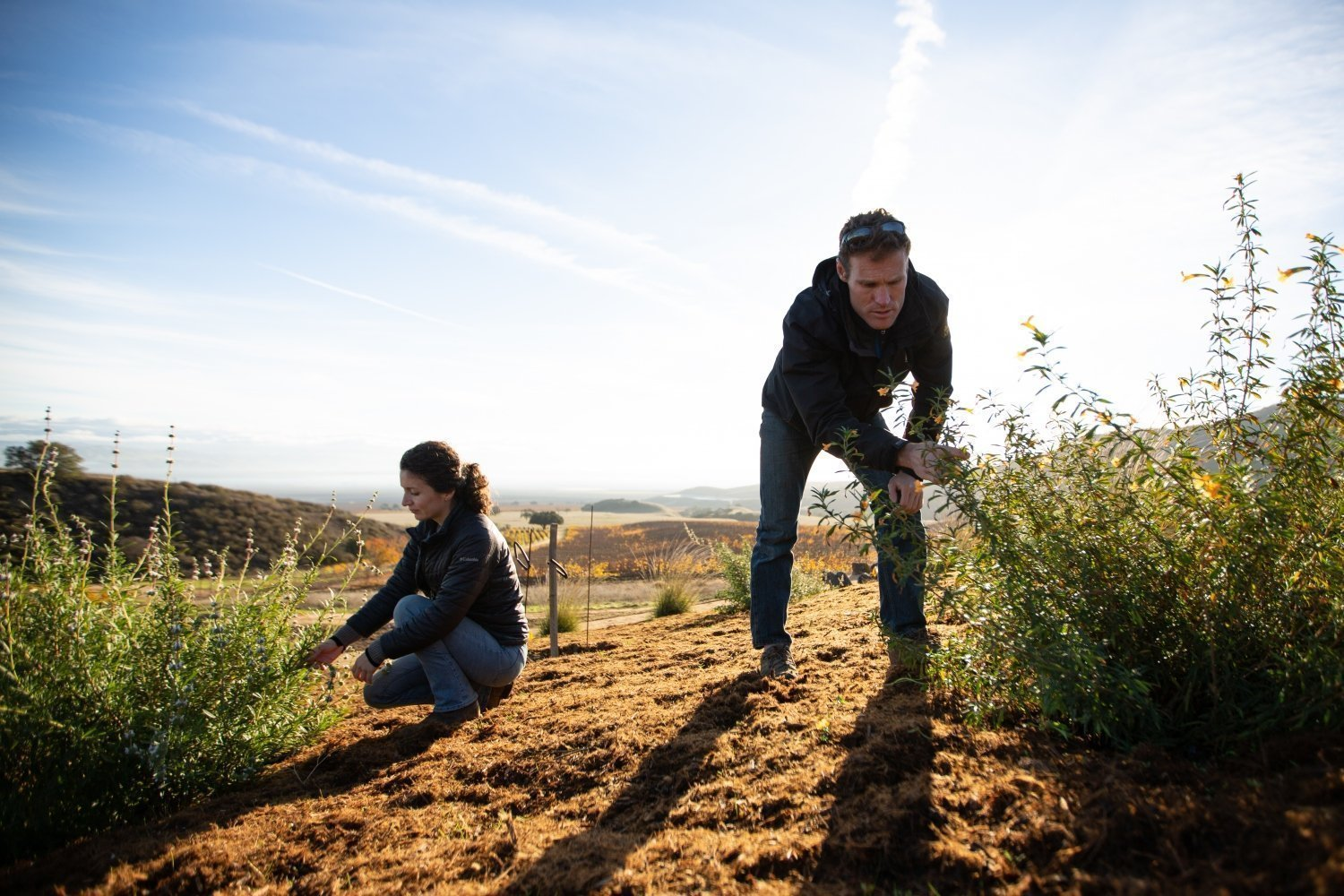 Farming for the Future. Sustainability at Pisoni Vineyards