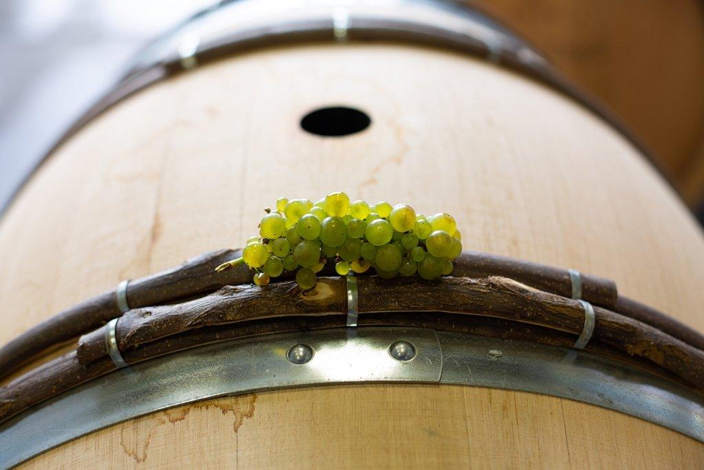 Chardonnay Grapes and Barrels
