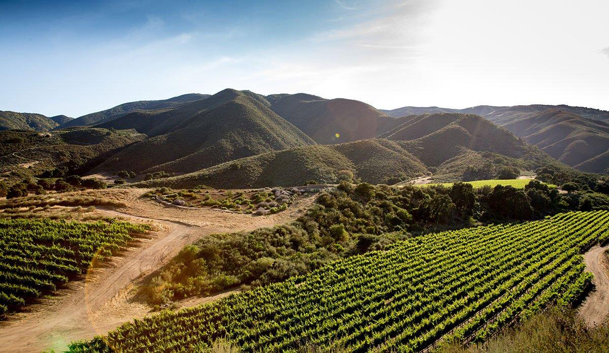 Pisoni Estate Vineyards