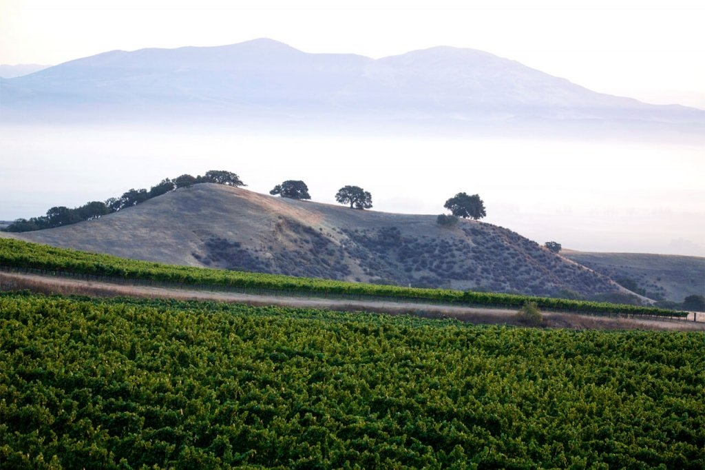 Foggy Mountains and Vineyards